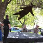 Фотофакт: У штаті Техас ведмідь, вихований Чаком Норрісом, напав на полісменів, запідозривши їх у корумпованості