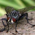 На Житомирщині батько двох дітей вбив муху