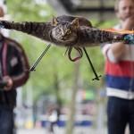 Армію Нідерландів підсилять летючі коти (відео)
