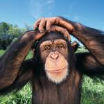 До списку партії «Україна – вперед!» увійшла шимпанзе з Київського зоопарку