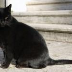 У Києві кастрували кота Януковича