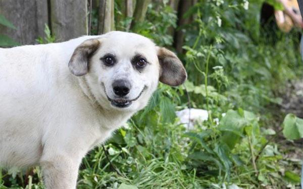 Собака усміхака