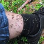 Уряд Азарова виділив кошти на боротьбу з комарами
