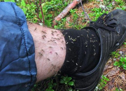 Комарі кусають за ногу