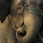 Миколаївський зоопарк не хоче купувати слона