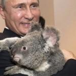 Коала, яку Володимир Путін обіймав в Австралії, впала в депресію