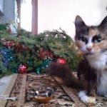 В Черкасах знайшли кота, байдужого до ялинок