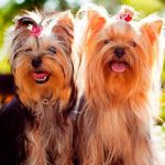 Приватбанк прийматиме собак у рахунок оплати за газ