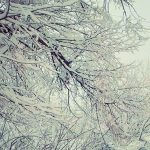 Шось зимно